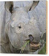 Indian Rhinoceros Grazing Kaziranga Wood Print