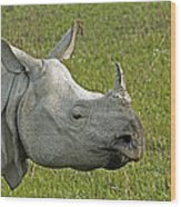 Indian Rhinoceros Wood Print