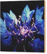 Indigo Bachelor  Wood Print