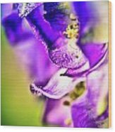 Indigo Flower Wood Print