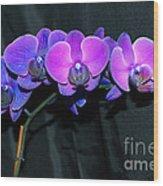 Indigo Mystique Orchids  Wood Print