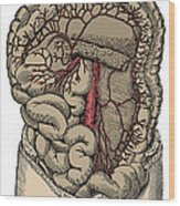 Inferior Mesenteric Artery And The Aorta Wood Print
