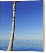 Infinity Pool Palm Wood Print
