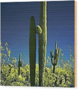 Infrared Saguaro 1 Wood Print
