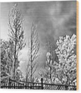 Infrared Summer Storm 2 Wood Print