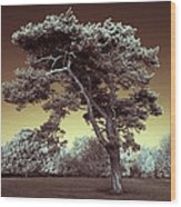 Infrared Tree Wood Print