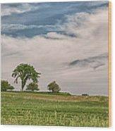 Innisfree Tree 15203c Wood Print