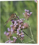 Insect And Flower Wood Print