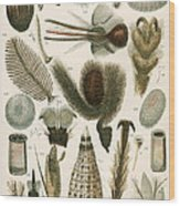Insect Microscopy, 19th Century Wood Print