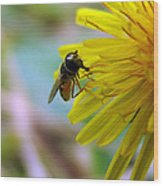 Insect On Flower 2 Wood Print
