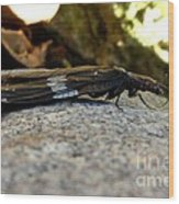 Insect Stripes Wood Print