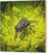 Insect Up Close - Summer Fly Sunbathing On A Yellow Perennial Garden Plant - Macro Photography Wood Print