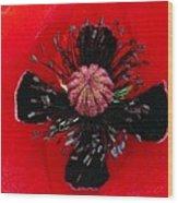 Inside A Poppy Wood Print