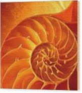 Inside A Shell Wood Print