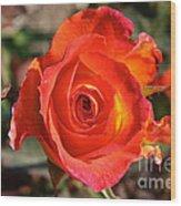 Intense Rose Wood Print