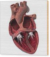 Internal Heart Anatomy, Artwork Wood Print