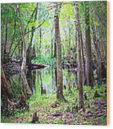 Into The Swamp Wood Print