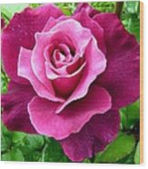 Intrigue Rose Wood Print