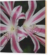 Inviting Lily Wood Print