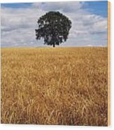 Ireland, Barley Field With Oak Tree Wood Print