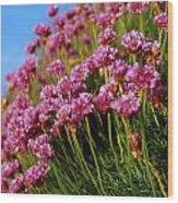 Ireland Close-up Of Seapink Wildflowers Wood Print