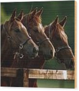 Ireland Thoroughbred Horses Wood Print