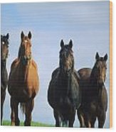 Ireland Thoroughbred Yearlings Wood Print