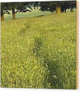 Ireland Trail Through Buttercup Meadow Wood Print