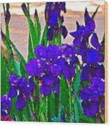 Iris 23 Wood Print by Pamela Cooper