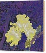 Iris 36 Wood Print