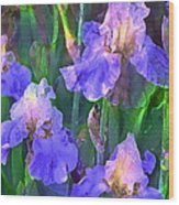 Iris 51 Wood Print by Pamela Cooper