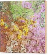 Iris Abstract I Wood Print