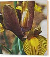 Iris After The Rain Wood Print