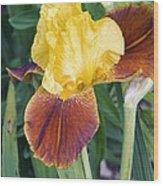 Iris 'all That Jazz' Wood Print