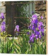 Iris At The Gate -1 Wood Print