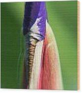 Iris Bud 1 Wood Print