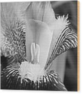 Iris Close Up In Black And White Wood Print