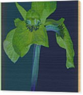 Iris Flower Design Wood Print