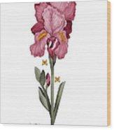 Iris I Wood Print by Anne Norskog