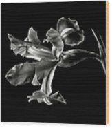 Iris In Black And White Wood Print