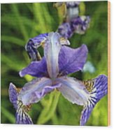 Iris In The Summer Morning Wood Print