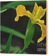 Iris In Yellow Wood Print