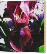 Iris Inner Beauty Wood Print