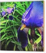 Iris Wood Print by Kevyn Bashore