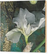Iris Moon Wood Print by George  Page