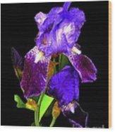 Iris On Black Wood Print