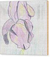 Iris Sketch Wood Print