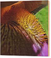 Iris Stamen Macro Wood Print