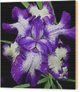 Iris Unfolded Wood Print