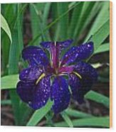 Iris With Rain Drops Wood Print